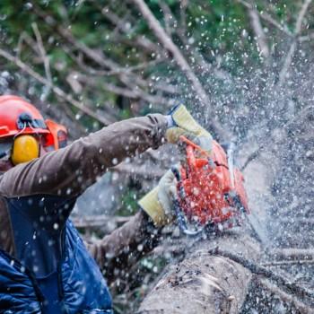 Šumarstvo, prerada i obrada drva